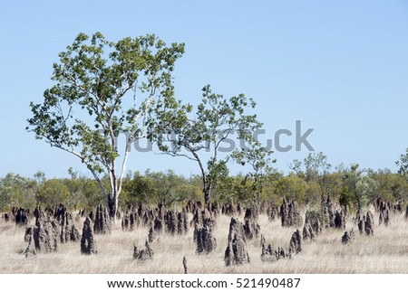 Termite mounds in outback  Queensland,Australia.