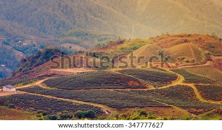 Terraced Field hill Sa Pa. Lao Cai province northern Vietnam