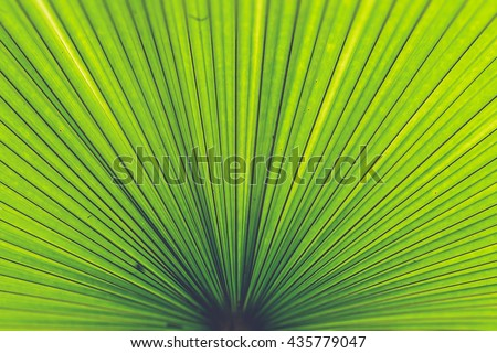 Texture of Green palm Leaf (Vintage filter effect used)