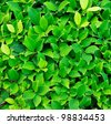 texture of green plant - stock photo