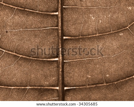 texture of the wood sheet