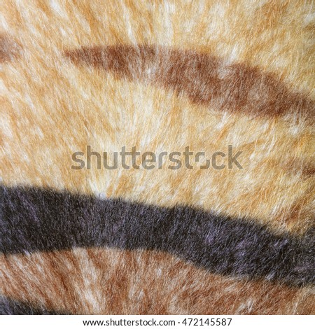 texture of tiger fur skin background