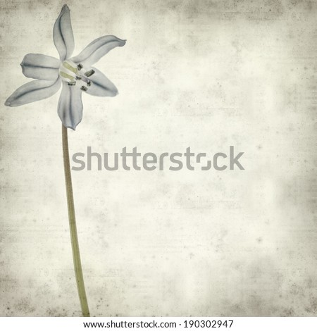 textured old paper background with scilla
