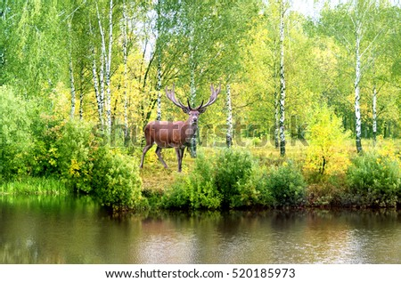 The adult deer in autumn forest.Wildlife