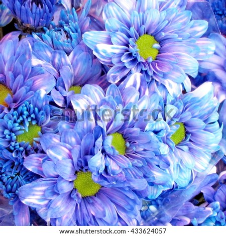 The asters of blue color on bazaar in Tel Aviv, Israel