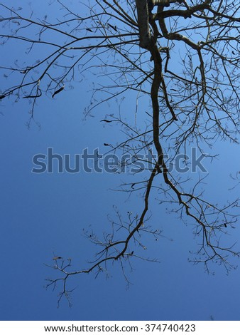 The bare branches over blue sky
