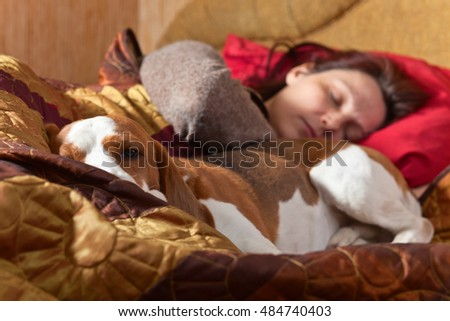 The Beagle sleeps on the bed with the mistress, focus on a dog head