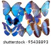 the beautiful blue butterfly - stock photo