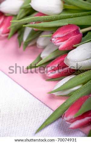 the bunch of fresh tulips on the texture surface