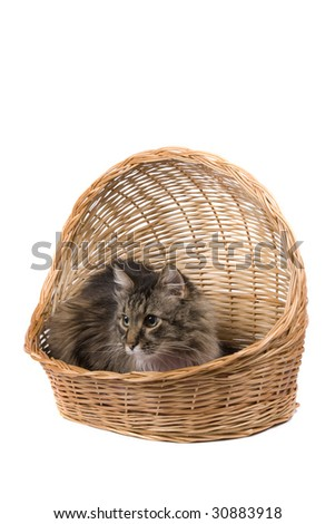 The cat is sitting in wicker basket. Isolated on a white background.