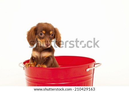 The Chiwakkusu In The Bucket