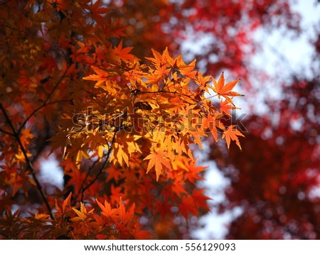 The colorful and beautiful autumn leaves in the garden with the warm sunlight