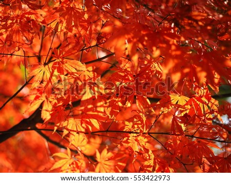 The colorful and beautiful autumn leaves with the warm sunlight