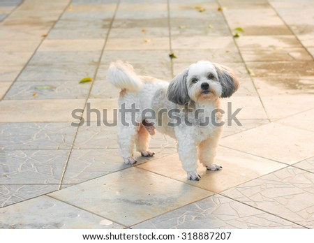 The cute dog standing  in sunlight on afternoon period