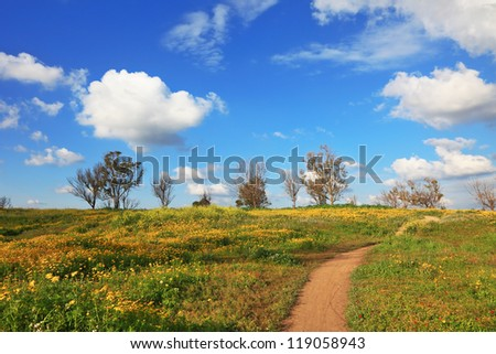 The dirt road through the spring fields. Flowering daisies in the desert.