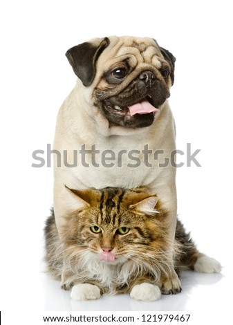 the dog embraces a cat. isolated on white background