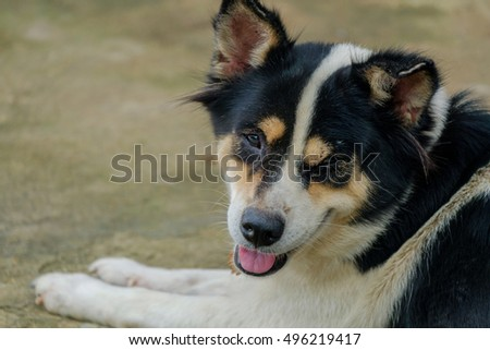 Great Australia Chubby Adorable Dog - stock-photo-the-dog-is-winking-and-looking-this-way-496219417  You Should Have_374210  .jpg