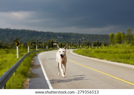 The dog running on road