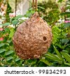 The Empty abandoned hornet's nest - stock photo