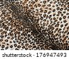 The fabric on striped leopard on background - stock