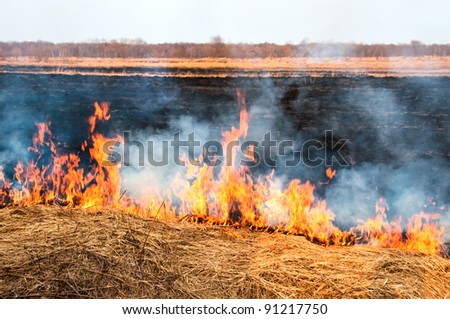 The fire on the nature - burns a grass in the field