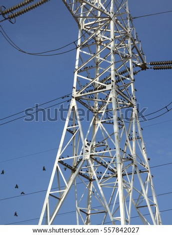 the flock of birds on the high voltage pylon against the blue sky