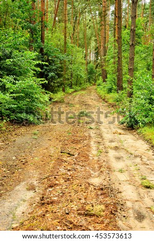 The forest road among green trees