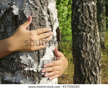 The girl hands hugging a tree trunk. To hold the birch. The concept of unity with nature, to draw strength from nature.