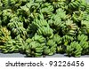 The green banana in Thailand - stock photo