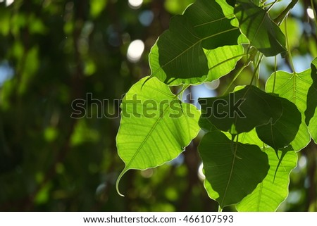 The green leave and background