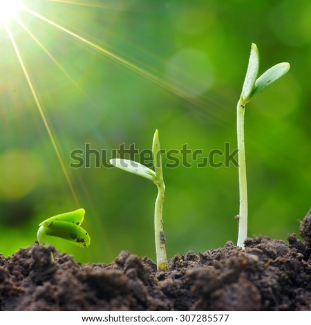 The growth of green plants. Growth concept and restart