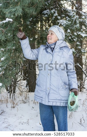 The herbalist gathers pine cones for medicinal purposes in the winter forest