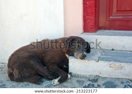 The homeless dog takes a porch as a pillow