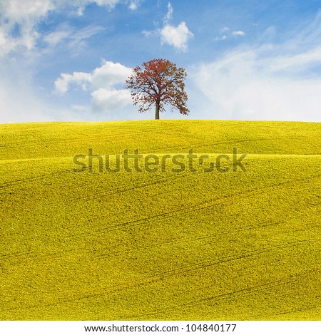 The hope, a conceptual background in a rural environment with a tree at horizon over a blue cloudy sky with white clouds, a field of yellow flowers in spring or summer ideal for agriculture or farming