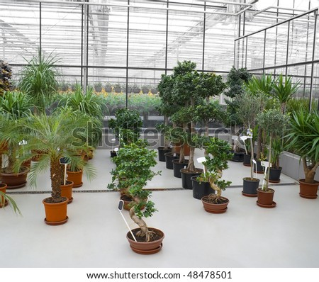 The Industrial hothouse, in which grow the decorative plants.