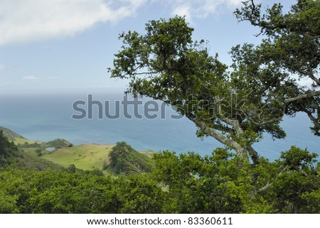 The lush green coast of California by the sea