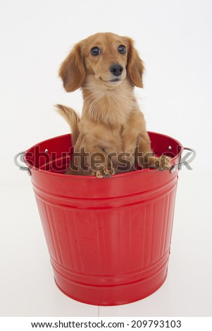 The Miniature In The Bucket