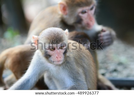 the Monkeys checking for fleas and ticks in the family.