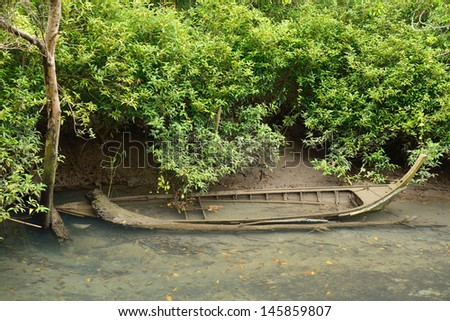 the old boat in mangroves forest, Krabi, Thailand.