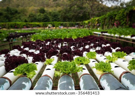 The organic vegetable farm for healthy eating.