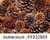 The Pine cone - stock photo