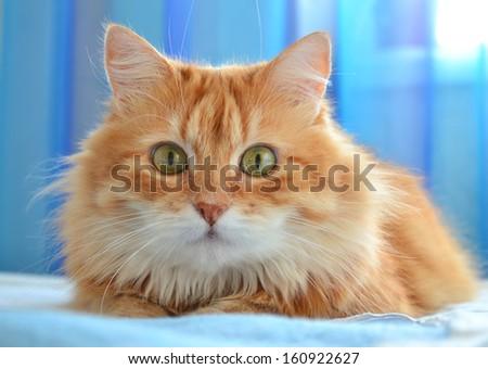Cat S Eye Pattern Atmosphere