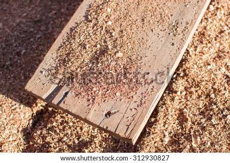 the sawdust on the wood.