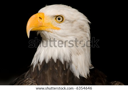 the sea eagle in front of black background