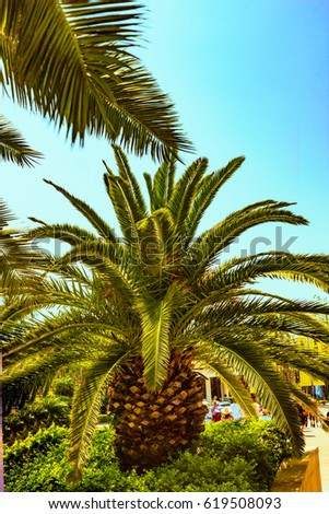 Beautiful nature yellow flowers palm trees stock photo 783802912 palm trees in a park in the center of buddhism nanshan mightylinksfo Gallery