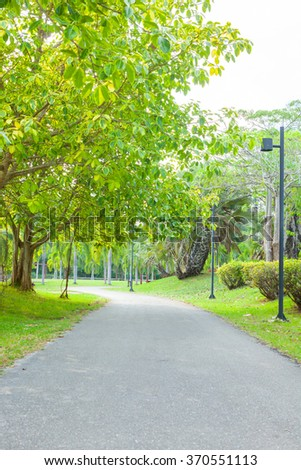 Green Alley Trees Stock Photo 29735236 Shutterstock