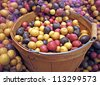 This produce stock image is a large basket of red, white and blue whole uncooked, raw potatoes.  Some have netted bags around the sides of the wooden basket.  Colorful harvest of bountiful vegetables. - stock photo