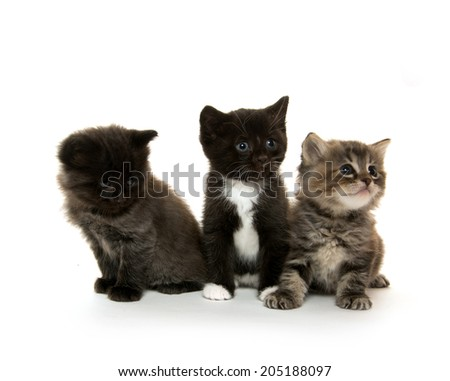 Three cute baby kittens on white background