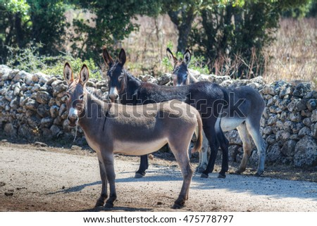 three donkeys in the countryside