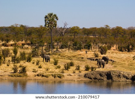 Three elephants standing around a water hole